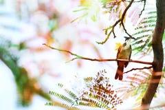 Ein Vogel auf Niederlassung der dubble Belichtung Lizenzfreie Stockbilder