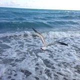 Ein Vogel, der über das Meer fliegt Stockfoto