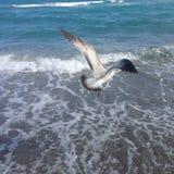 Ein Vogel, der über das Meer fliegt lizenzfreie stockfotografie