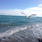 Ein Vogel, der über das Meer fliegt Lizenzfreie Stockbilder