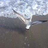 Ein Vogel, der über das Meer fliegt Lizenzfreies Stockfoto