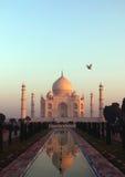 Ein Vogel, der über Taj Mahal bei Sonnenaufgang fliegt Lizenzfreie Stockbilder