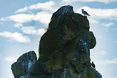 Ein Vogel, der auf einem Stein im Meer sitzt stockfotografie