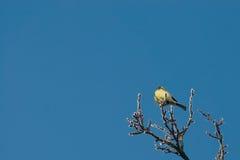 Ein Vogel, der auf einem Zweig sitzt Stockbilder