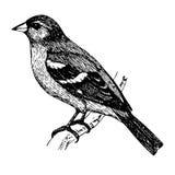 Ein Vogel, der auf einer Niederlassung, Skizzentätowierung sitzt lizenzfreie stockbilder