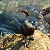 Ein Vogel, der auf Stein steht Stockfotos