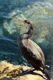 Ein Vogel, der auf Stein steht Lizenzfreies Stockfoto