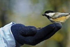 Ein Vogel in der Hand Lizenzfreie Stockbilder