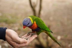 Ein Vogel in der Hand Stockbild
