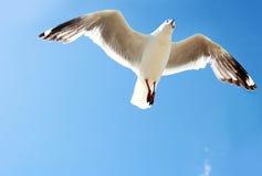 Ein Vogel, der hoch in den blauen Himmel fliegt Lizenzfreie Stockbilder