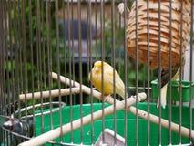 Ein Vogel, der im Käfig sitzt stockfoto