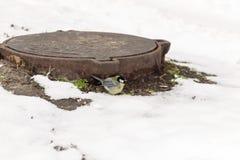ein Vogel der Meise sitzt auf einem thermischen Abwasserkanal in der Stadt, um Th Lizenzfreie Stockbilder