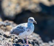 Ein Vogel, der von einer Schiene am Seufzer eines Person comin gcb Abschlusses sich entfernt lizenzfreies stockbild