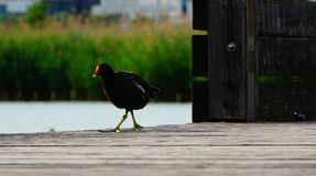 Ein Vogel an einem sonnigen Tag nahe dem See Lizenzfreie Stockbilder
