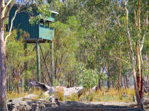 Ein Vogel-Fell für Vogelbeobachter am See Broadwater Queensland Australien. lizenzfreie stockfotos