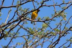 Ein Vogel gefangen genommen in Namibia stockbilder