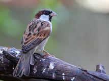 Ein Vogel gehockt auf einer Niederlassung Stockbilder