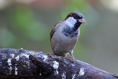 Ein Vogel gehockt auf einer Niederlassung Lizenzfreie Stockfotos