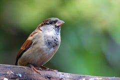 Ein Vogel gehockt auf einer Niederlassung Lizenzfreies Stockfoto
