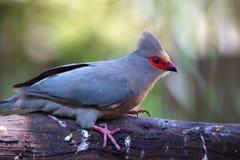 Ein Vogel gehockt auf einer Niederlassung Lizenzfreies Stockbild