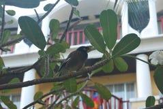 Ein Vogel im Baum stockfotos
