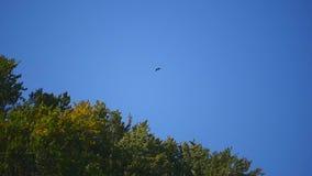 Ein Vogel im blauen Himmel stock footage