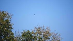 Ein Vogel im blauen Himmel stock video