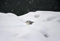 Ein Vogel im Schneesturm Lizenzfreie Stockfotografie