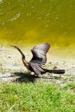 Ein Vogel ist sich vorbereiten zu fliegen Stockbilder