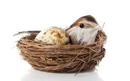 Ein Vogel mit einem Ei Stockbild