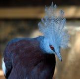 Ein Vogel mit einem Gefieder Stockfoto