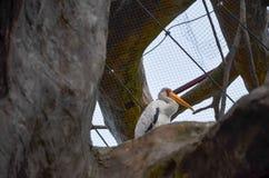 Ein Vogel mit einem langen Mund lizenzfreies stockbild