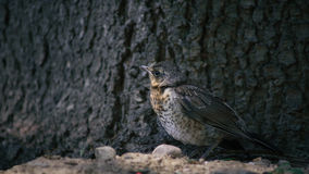 ein Vogel nahe Baum Lizenzfreies Stockfoto