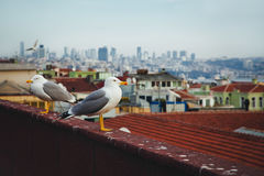 Ein Vogel nahe dem Hagia Sophia in Istanbul, die Türkei Stockfoto