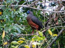 ein Vogel nie, vor gesehen im cocora Tal Lizenzfreie Stockfotografie