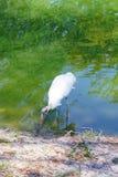 Ein Vogel sucht nach Lebensmittel Stockfotos