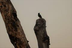 Ein Vogel an Sun-Satz Stockfotos