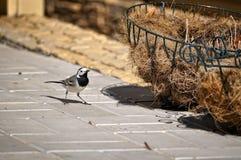 Ein Vogel und Materialien für den Aufbau des N Lizenzfreies Stockbild