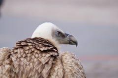 Ein Vogelanstarren Stockfotos
