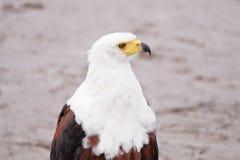 Ein Vogelanstarren Stockbilder