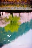 Ein Vogelfliegen über Nishiki-Fluss Stockfoto