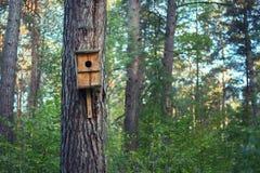 Ein Vogelhaus auf einem Baum im Wald stockbild