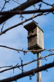 Ein Vogelhaus auf einem hölzernen Stock durch Niederlassungen mit Hintergrund des blauen Himmels lizenzfreies stockbild