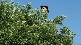 Ein Vogelhaus in einem Gartenbusch stock video footage