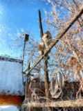 Ein voller Tag des Winters, eine ländliche Landschaft mit einer rustikalen Gartenabdeckung Stockbilder
