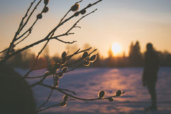 Ein Vorbote des Frühlinges Stockfotografie