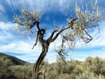 Ein Wüsten-Weg stockfotografie