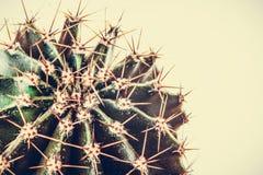 Ein Wüstenkaktus, saftige Anlage Stockfoto