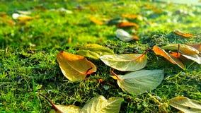 Ein Wagen mit einem Stapel der gefallenen Blätter stockbild