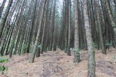 Ein Wald in den ekuadorianischen Anden Lizenzfreies Stockfoto